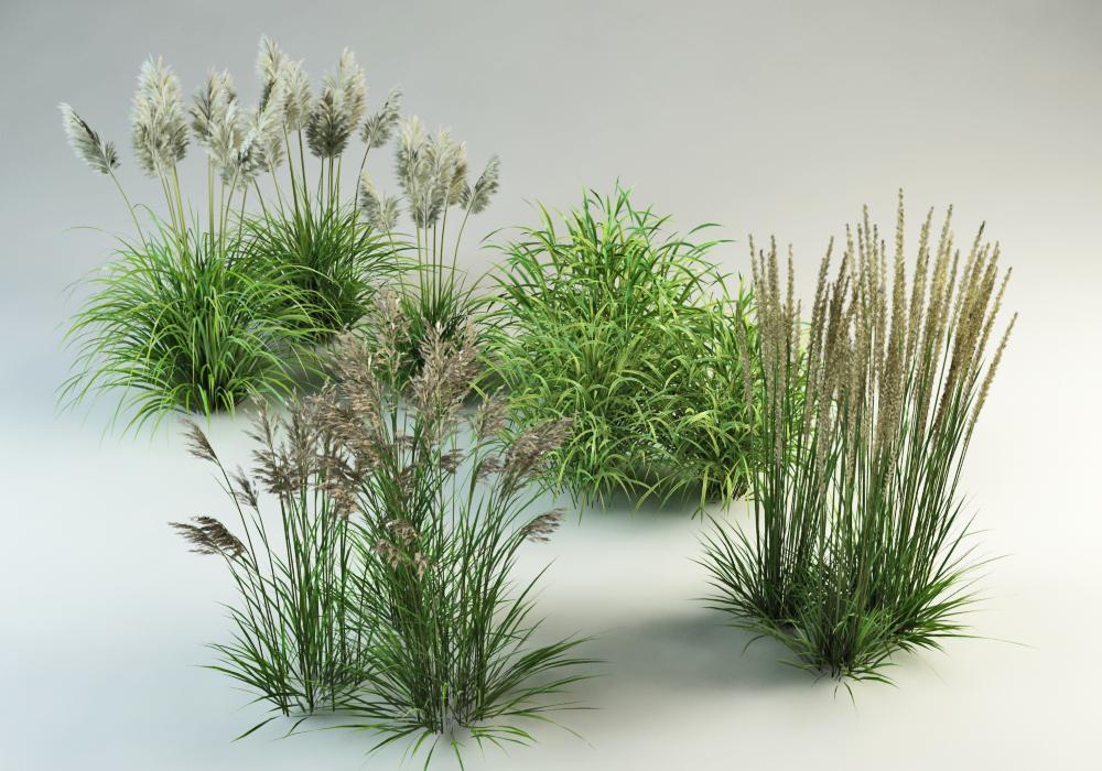 grasses planting garden 3d 3ds