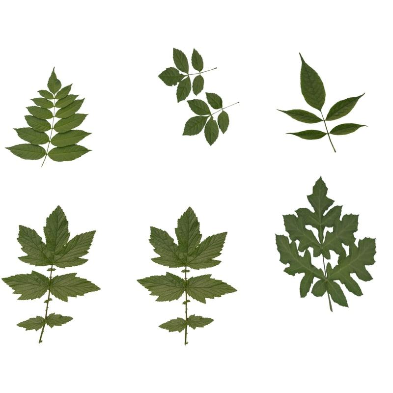3d model leaves