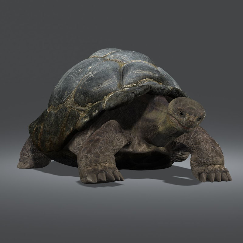 3d galapagos tortoise animation