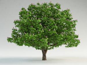 horse-chestnut flowering chestnut 3ds