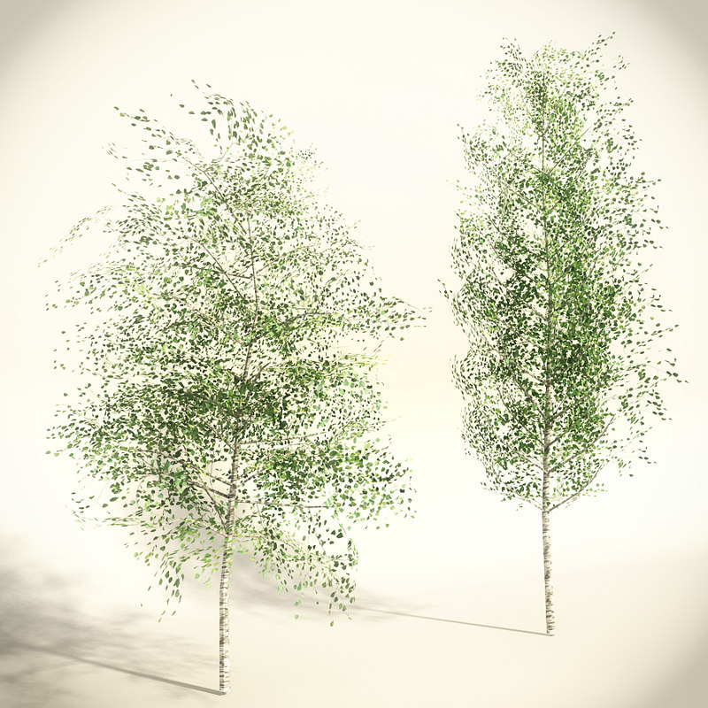 set birch trees polygonal fbx