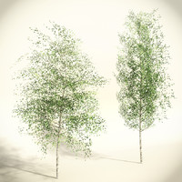 Birch Tree Low Polygon Set