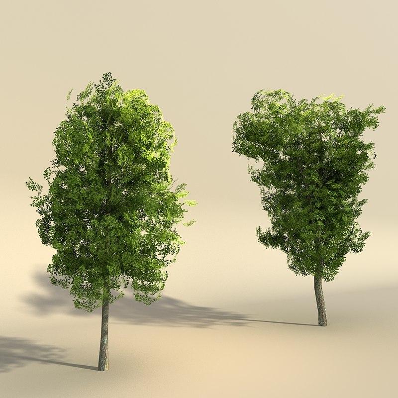 3d set elm trees polygonal