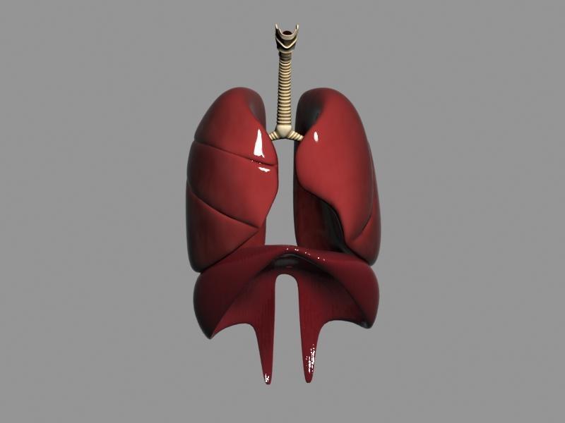 3d model respiratory