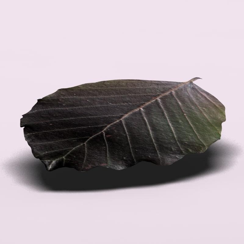 cupper beech tree leaf 3d model