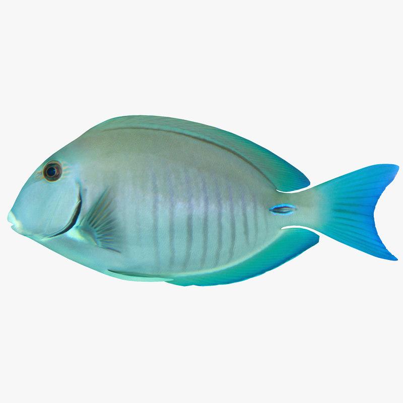 Doctorfish tang 3ds for 13 fishing origin c