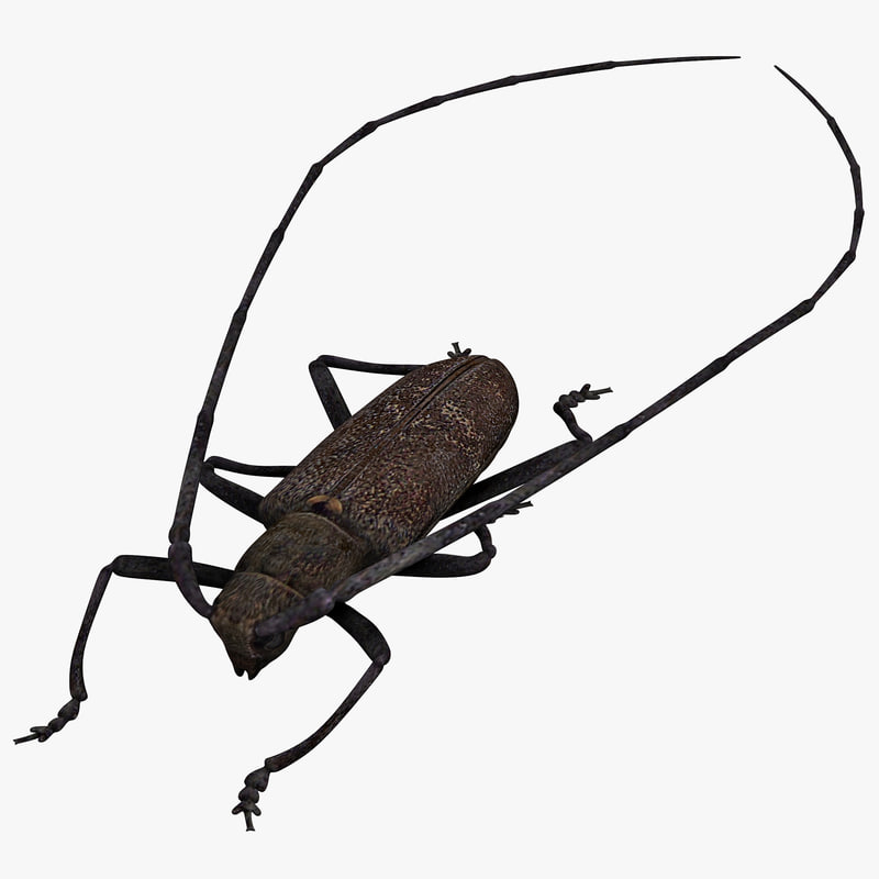 3d model of monochamus galloprovincialis
