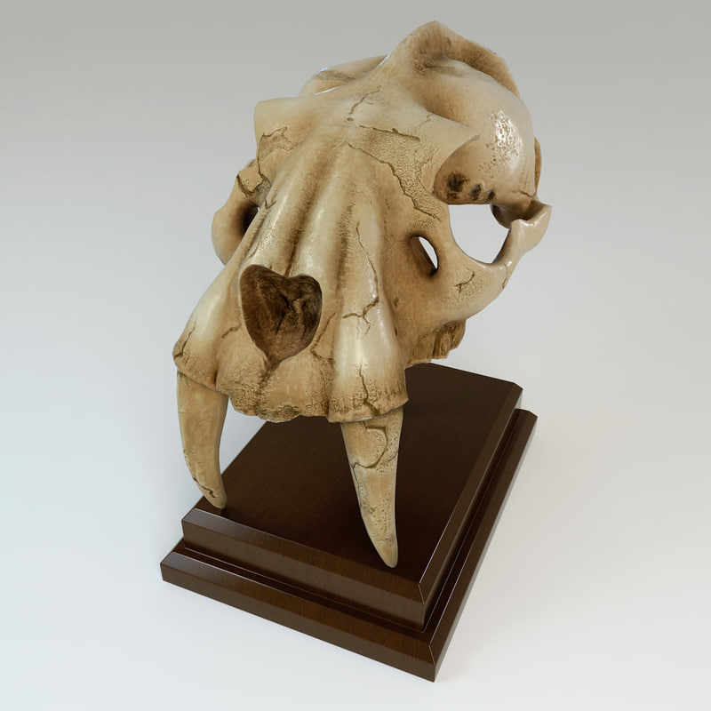 3d model of fossilized saber tooth skull