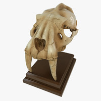 Fossilized Saber Tooth Skull