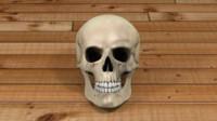 Skull Textured