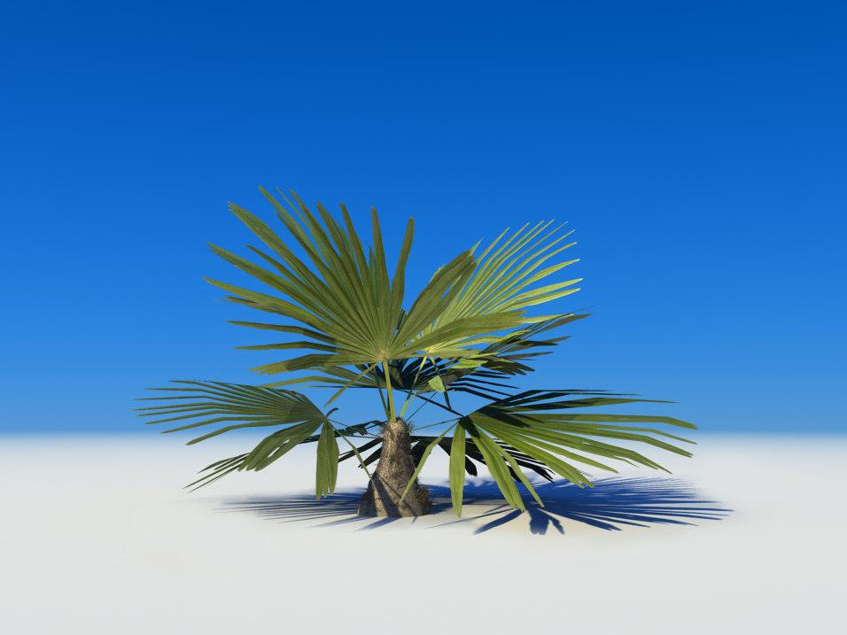 3d palm