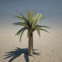 Medium Palm