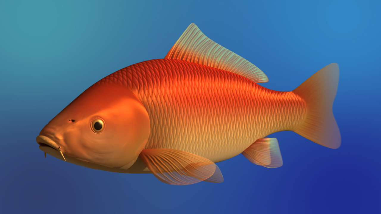 carp fish 3d ma