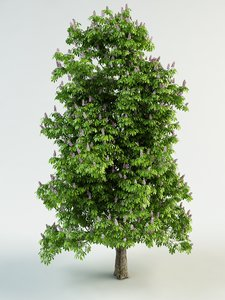 horse-chestnut flowering chestnut 3d model