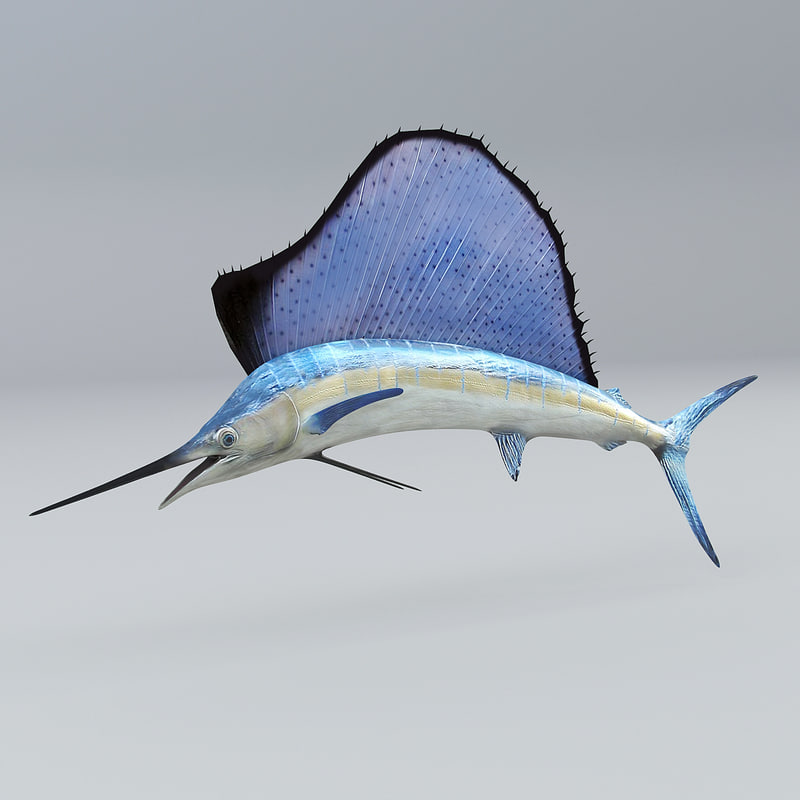 sail fish sailfish 3ds