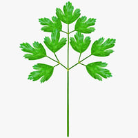 italian parsley 3d model