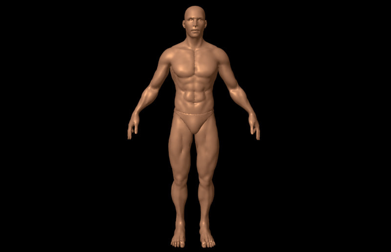 Obj Human Male Anatomy
