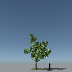 free max model tree oak v2