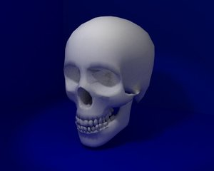 skeleton head 3d model