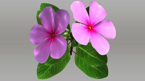 3d catharanthus flowering plants