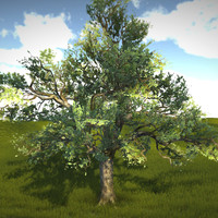 3d real time lod tree oak model