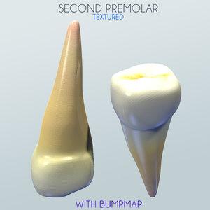 second premolar 3d obj