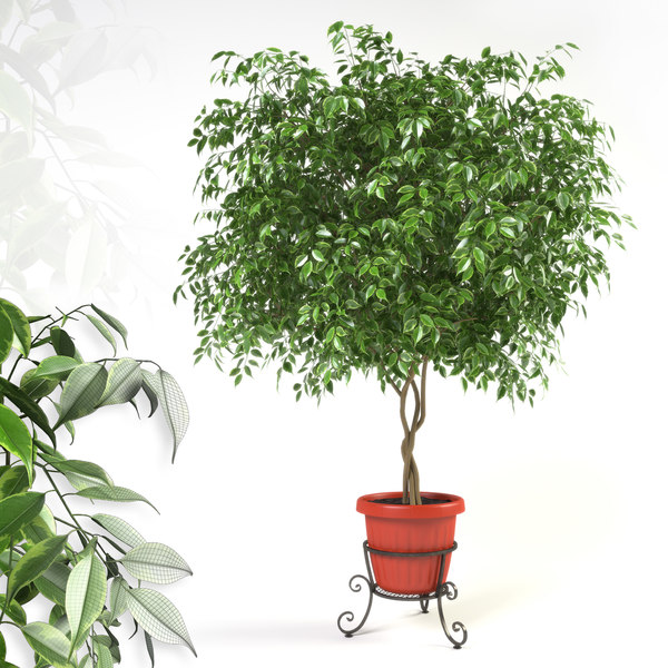 max ficus forged