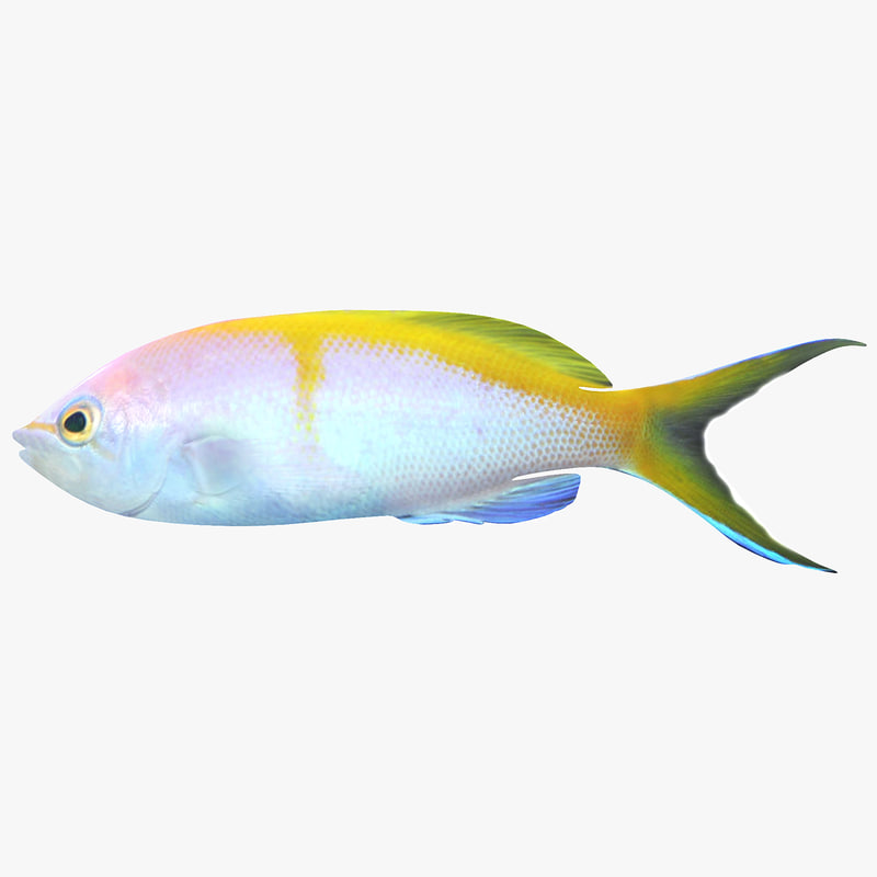 bartlett anthias max