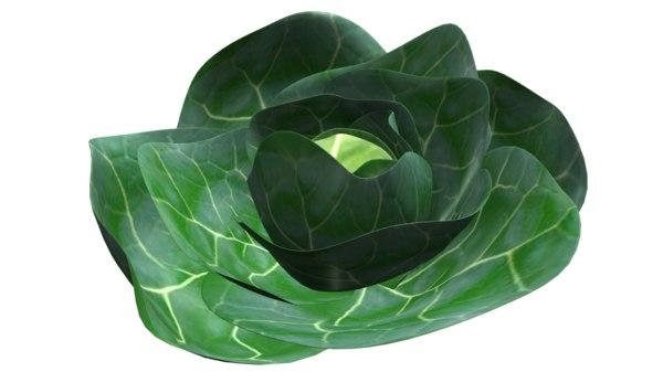 brassica oleracea obj