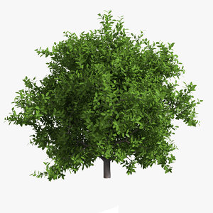 lime tree 3d max