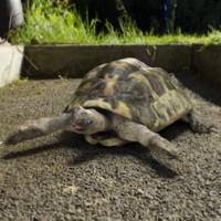 3d tortoise model