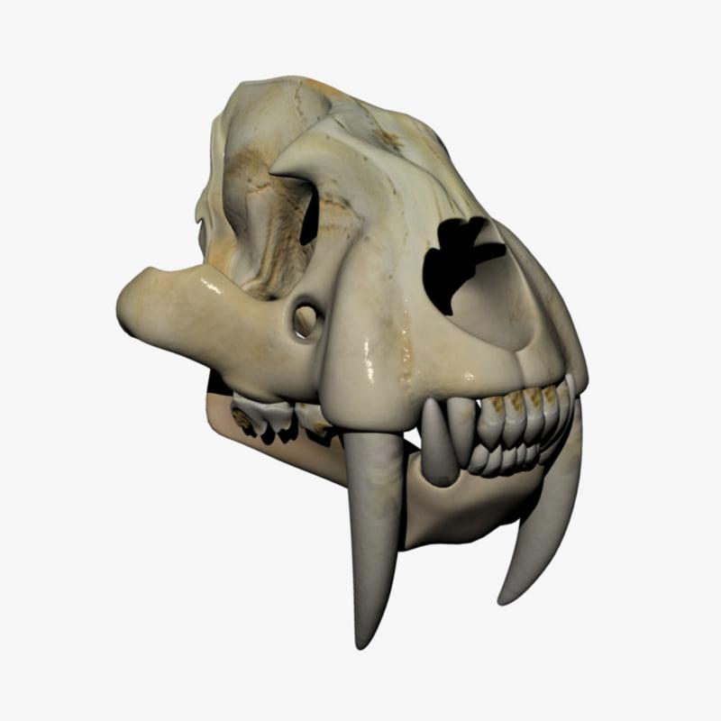 3d model saber tooth tiger