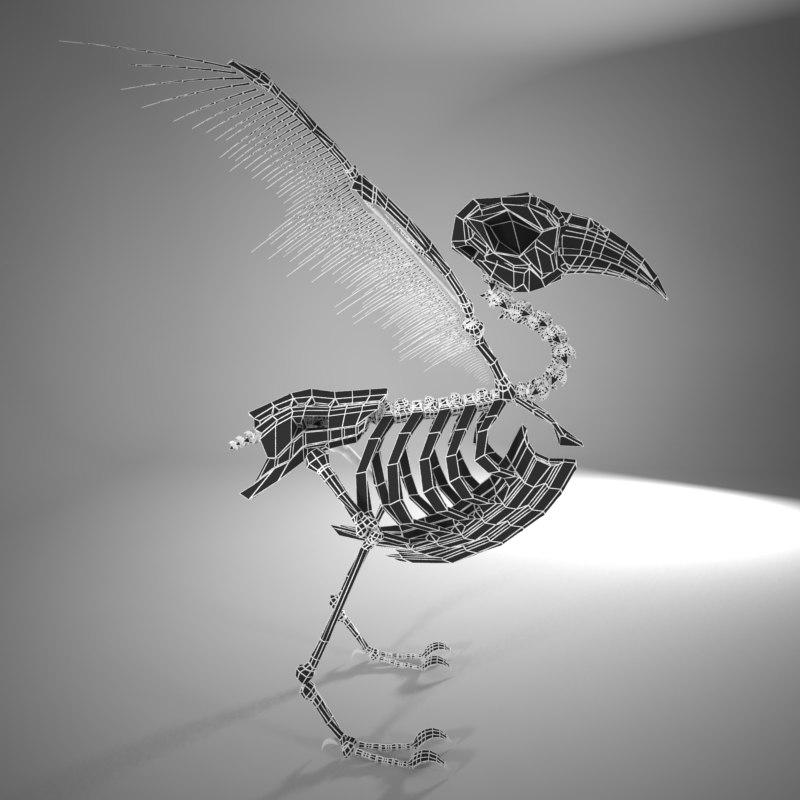 3d model bird skeleton