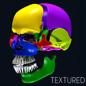 anatomy skull color parts 3ds