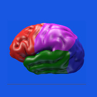 brain s 3ds