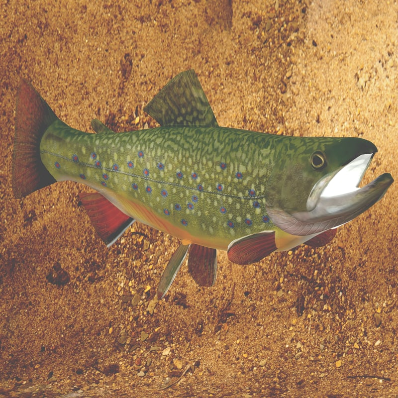 brook trout max