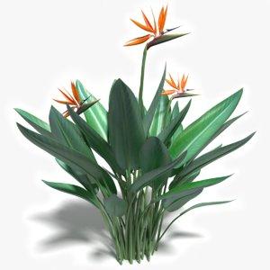 3d bird paradise flower