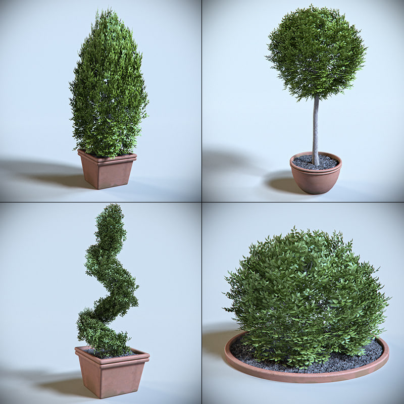 decoration shrub 3d model