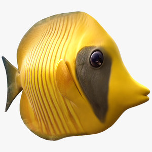 3d yellow butterfly fish