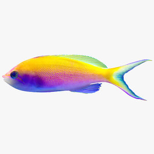 bartlett anthias 3d 3ds