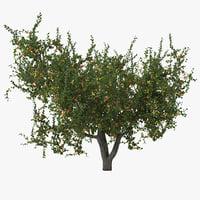 max apricot tree