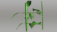 3d model clematis garden