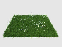 maya grass margerita