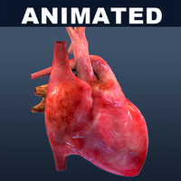 Heart ANIMATED textured
