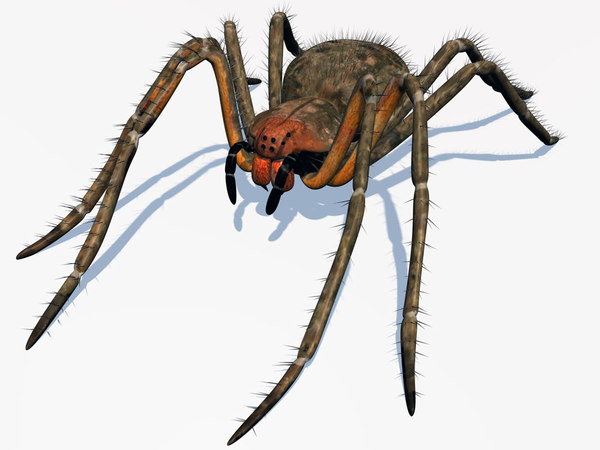 3ds female spider phoneutria
