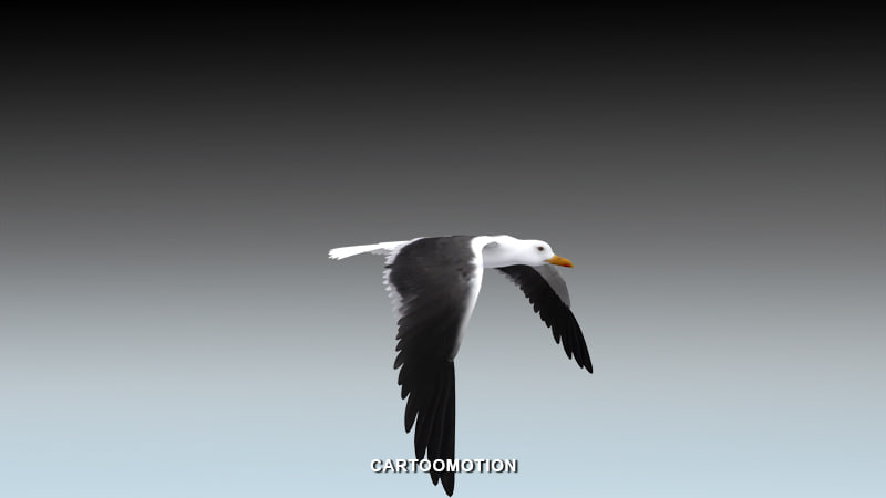 seagull animation 3d model