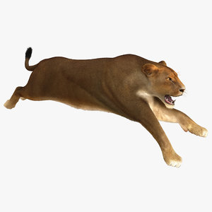 3d lioness pose 3 fur model