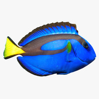 3ds pacific blue tang