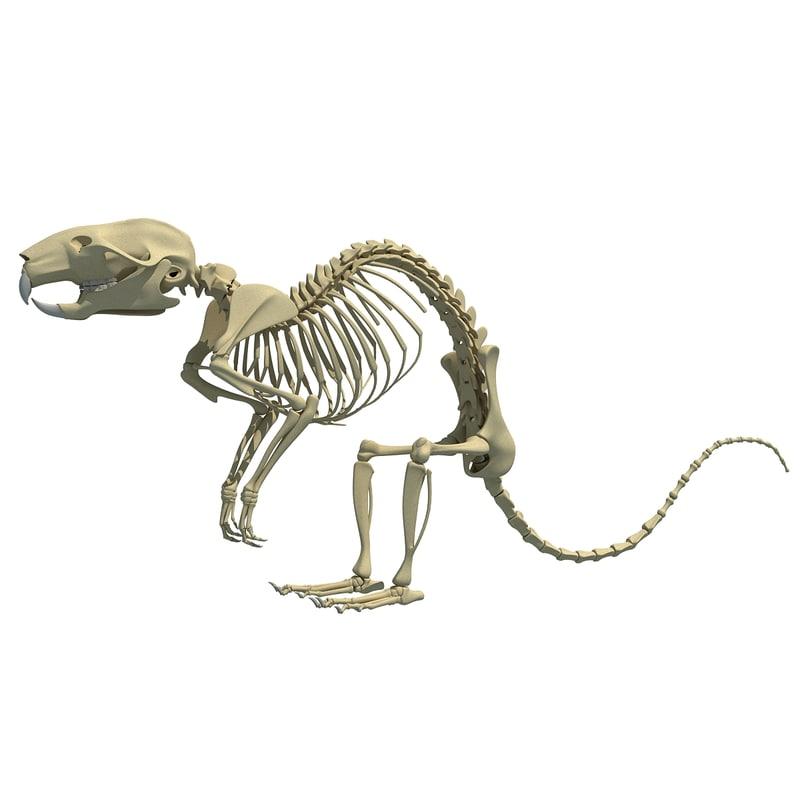 3d model rat skeleton