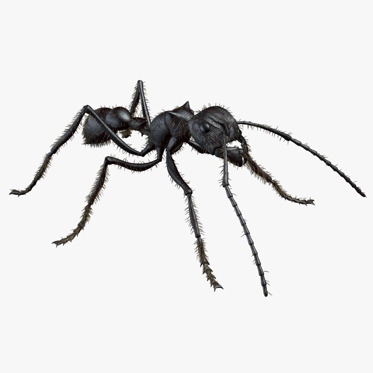 rigged bullet ant 3d model